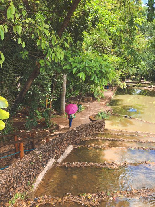 Bosque dos Buritis é um dos lugares para relaxar em Goiânia