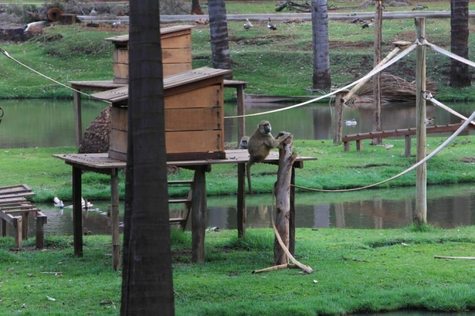 Zoológico de Goiânia: sinônimo de lazer e conscientização ambiental