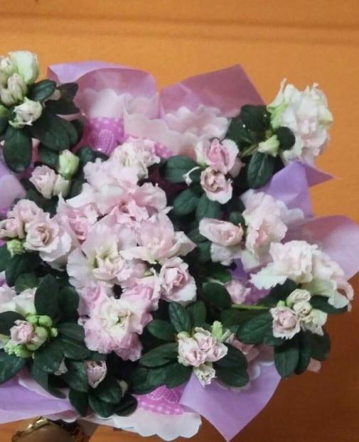 floricultura em Goiânia