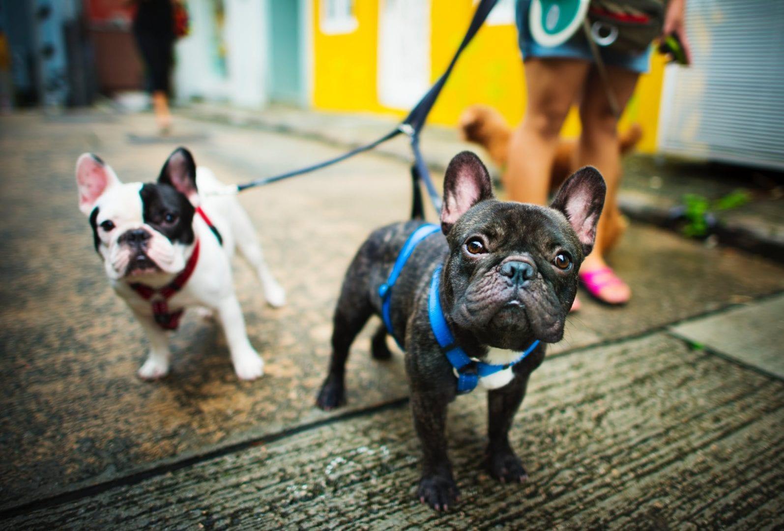Animais em Goiânia: 9 lugares em que você pode levar seu bichinho