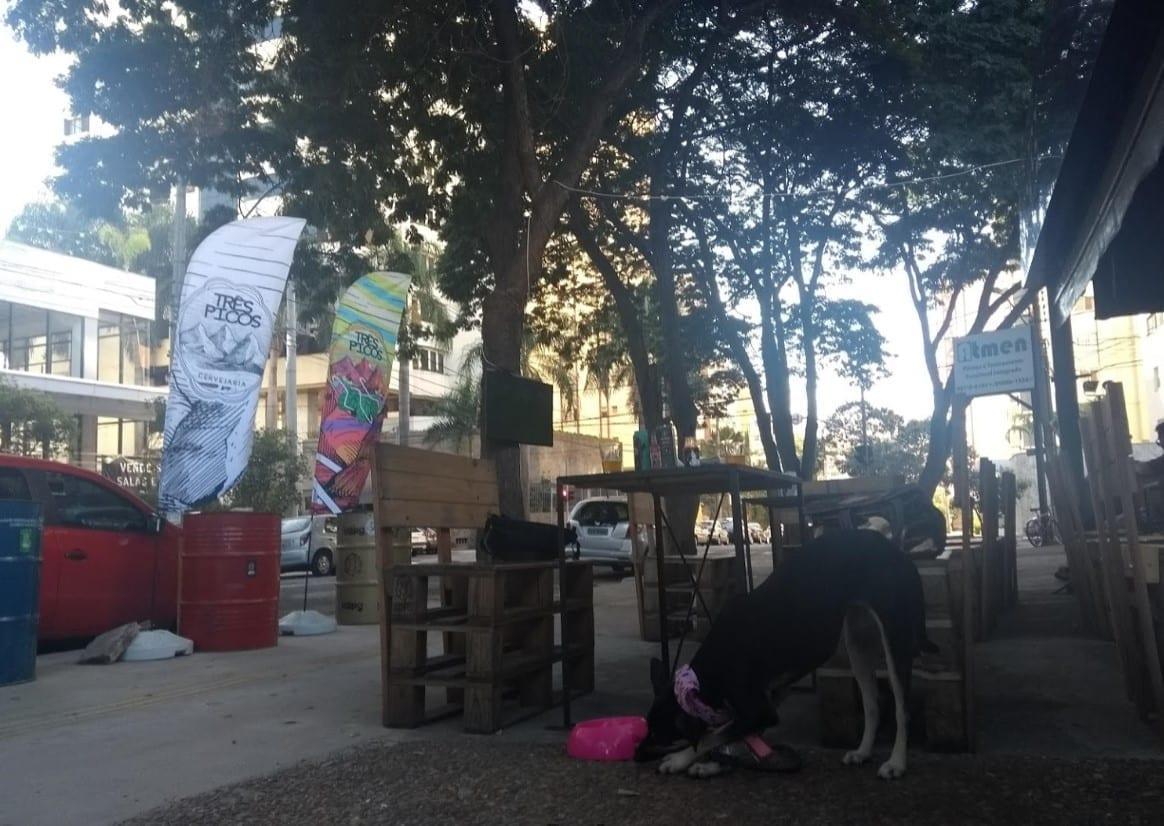 Animais em Goiânia: x lugares em que você pode levar seu bichinho / pet friendly