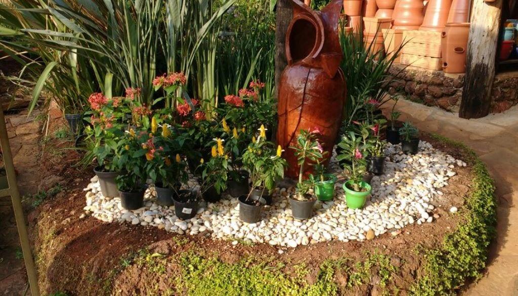 Plantas em Goiânia: encontre a melhor opção de viveiro na cidade