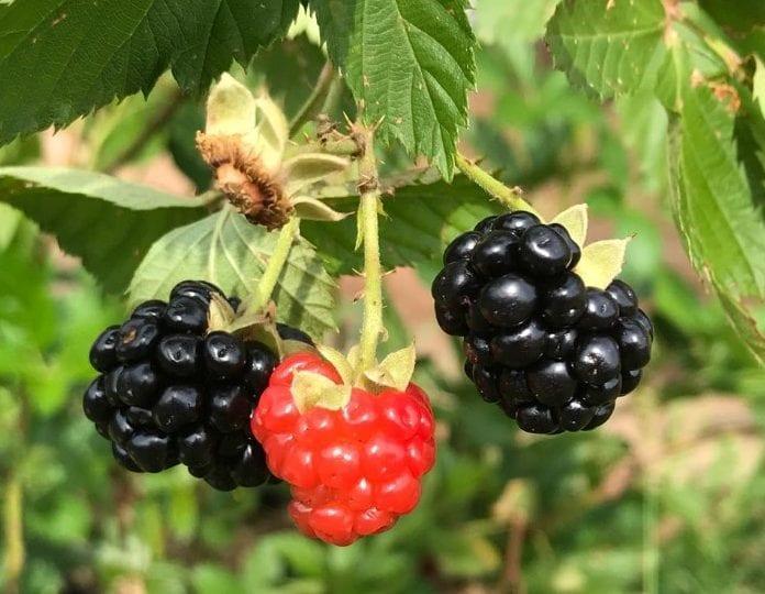 Plantas em Goiânia: melhores opções para montar seu jardim / viveiro