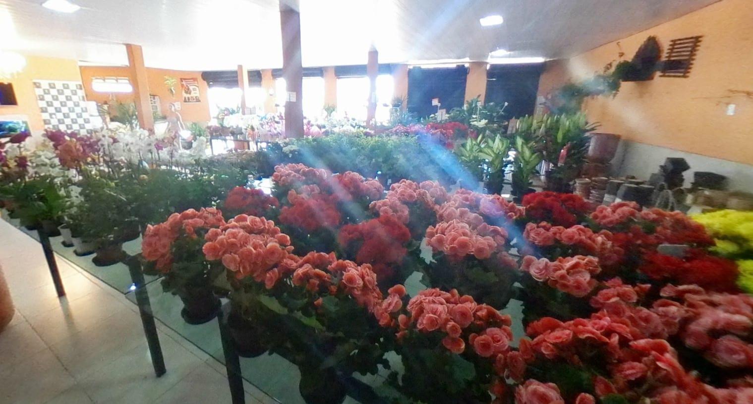 floricultura em Anápolis