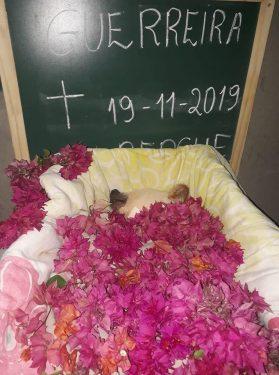 Morre cachorrinha vítima de maus tratos que teve olhos perfurados, em Jataí