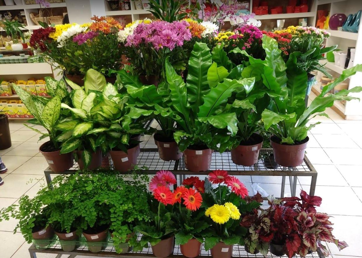 floricultura em Rio Verde