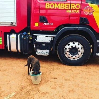 Vídeo mostra bombeiros resgatando cachorro em cisterna, em Goianira
