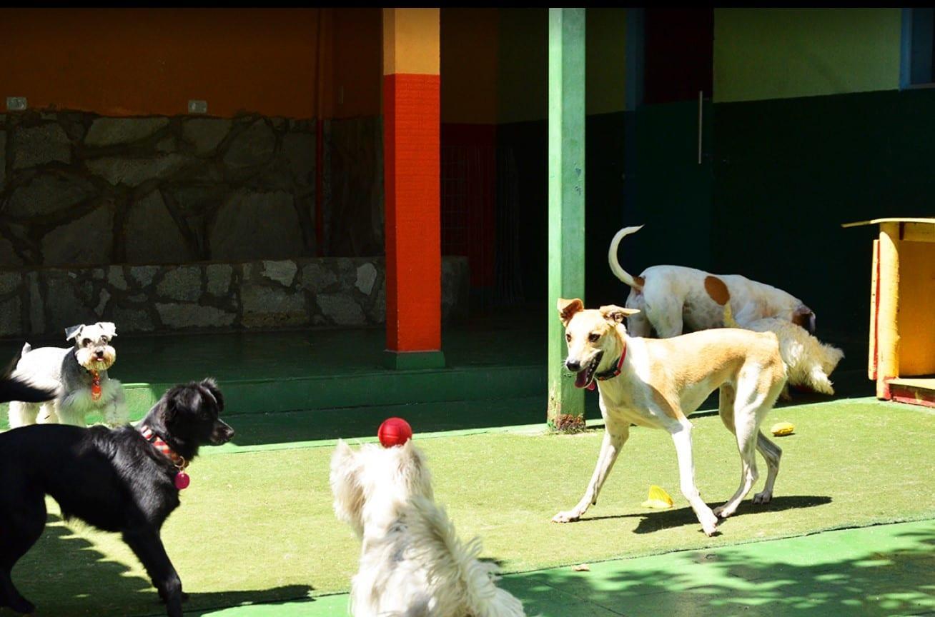 hotel para cachorro Goiânia